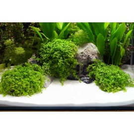DENNERLE - Ghiaia naturale Beach 0,1-0,6mm 5Kg - Plantahunter Substrato per Aquascaping