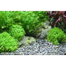 DENNERLE - Ghiaia naturale River S 4-8mm 5Kg - Plantahunter Substrato per Aquascaping