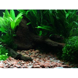 DENNERLE - Ghiaia naturale Colorado 12-15mm 5Kg - Plantahunter Substrato per Aquascaping