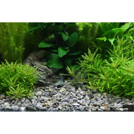 DENNERLE - Ghiaia naturale River L 8-12mm 5Kg - Plantahunter Substrato per Aquascaping